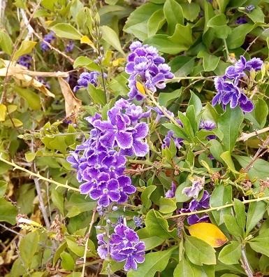Okayama J Garden Pune